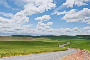 Wheatfields of the Palouse